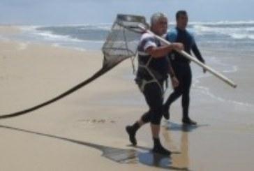 Los coquineros denuncian que los barcos siguen faenando a pesar de la veda