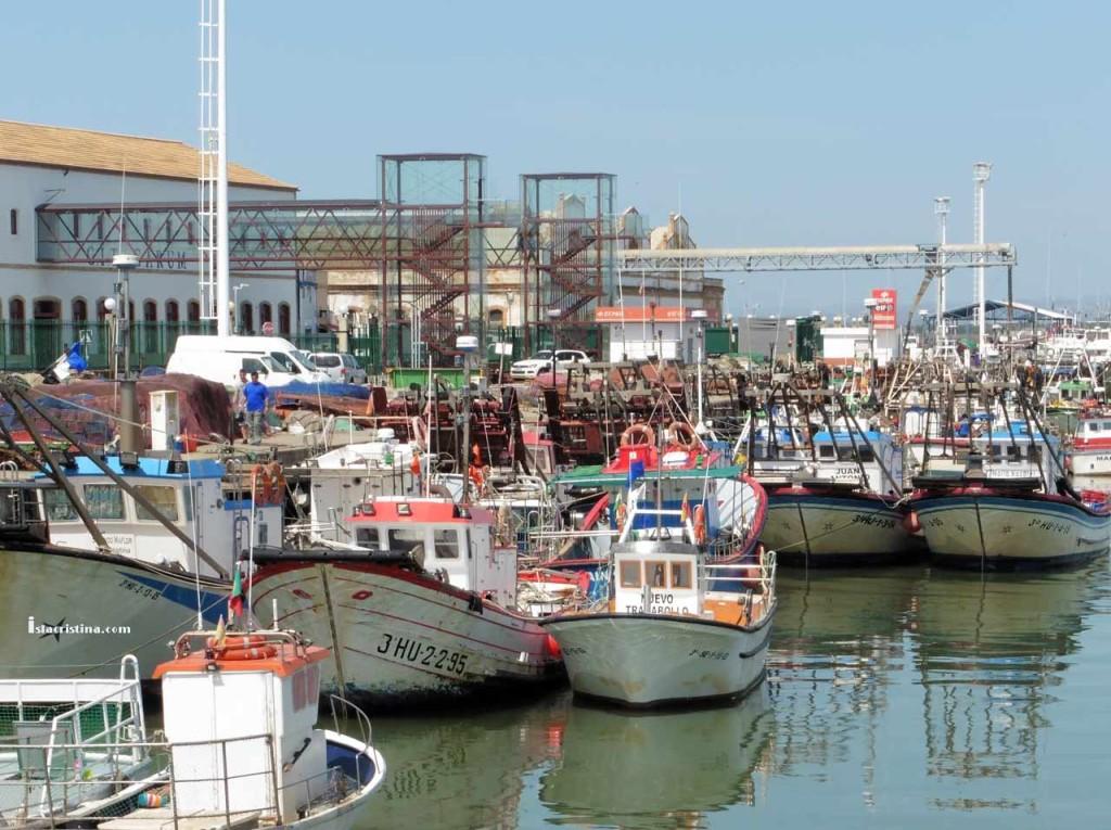 España defenderá ante Bruselas la pesquería de la sardina