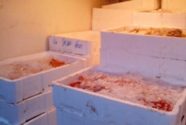 Decomisan en Mercamálaga pescado y marisco inmaduro de Ayamonte e Isla Cristina