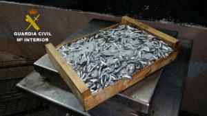 Intervenido en la A-49 pescado inmaduro procedente de Isla Cristina
