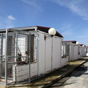 68 perros son adoptados tras mes y medio de servicio de la web del Refugio Provincial de Animales