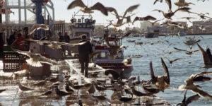 Boquerones, chirlas y coquinas, en el punto de mira por sobrexplotación en la costa