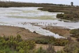 Cita a declarar a ocho cargos públicos por un vertido en las marismas de Isla Cristina