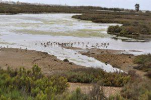 Safari fotográfico y taller de identificación de aves en las Marismas del Isla Cristina