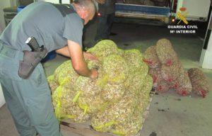 Intervienen cerca de 80 kilos de bivalvos inmaduros guardados en un garaje de isla
