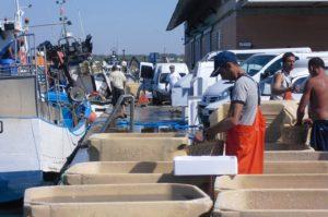 Ayudas para entidades asociativas del sector pesquero por valor de 500.000 euros