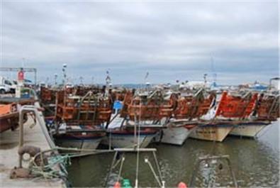 El caladero de la chirla del Golfo de Cádiz se regenera en un 60%
