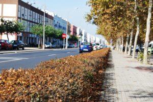 Comunicado Andalucista sobre las deficiencias en el Servicio de Jardinería