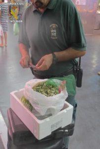 Inspección Pesquera se incauta de 2.283 kilos de chirla y coquina en la última semana