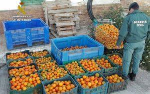 La Guardia Civil de Huelva interviene alrededor de 500 kilos de naranjas y mandarinas