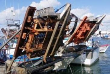 La Junta pide al sector de la chirla que tome conciencia de la «crítica situación» que atraviesa el caladero
