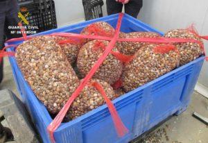 Junta y Guardia Civil se incautan de 8.000 kilos de pescado inmaduro desde principios de verano