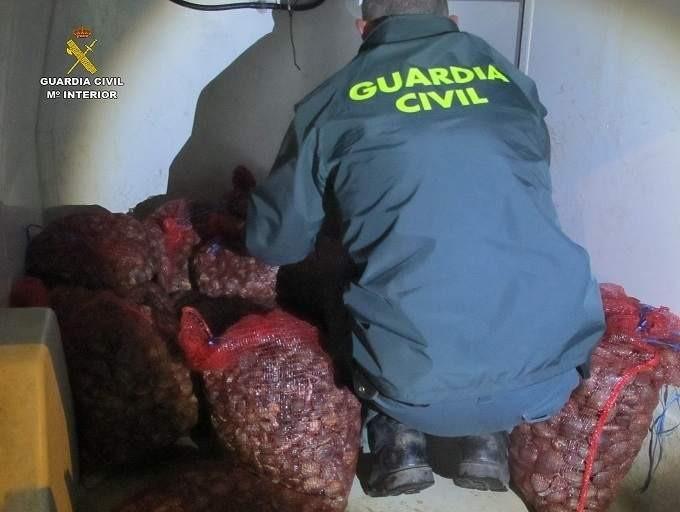 Intervienen 350 kilos de almeja japonesa inmadura en Isla Cristina