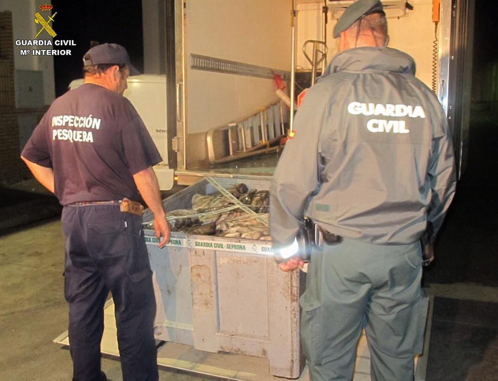 Intervienen más de 3.000 kilos de pulpo prohibido por veda en Isla Cristina