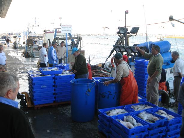 Los barcos de cerco isleños podrán pescar 3.000 kilos de boquerón al día