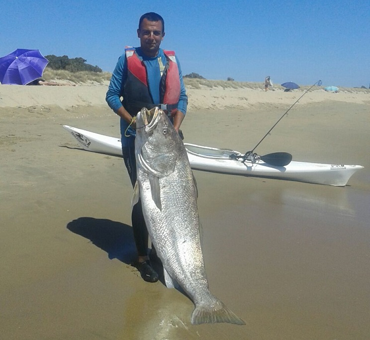 Capturan en Isla Cristina una monstruosa corvina ¡de 47 kilos!