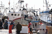 Portugal estudia prohibir la pesca de sardina