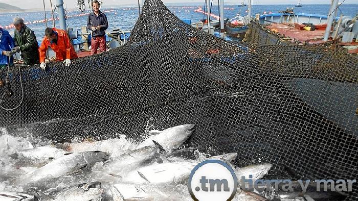 Isla Cristina y su almadraba, este domingo en 'Tierra y Mar'