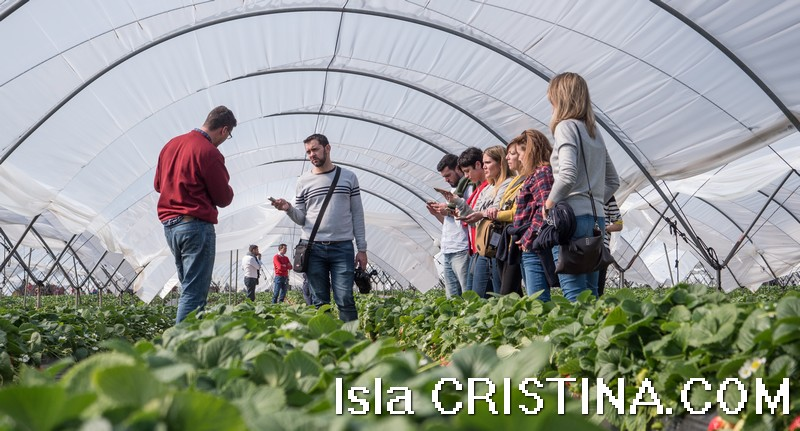 Periodistas españoles visitan Huelva para conocer el sistema productivo de las fresas