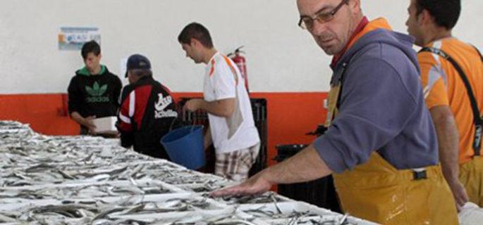 La UE da luz verde al plan de la sardina que presentaron conjuntamente España y Portugal
