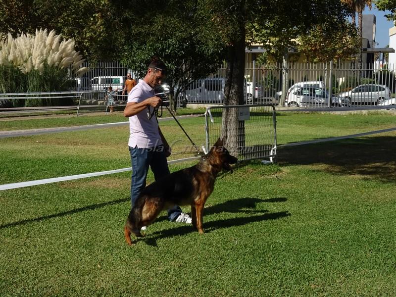 Imágenes «Exhibición Canina» celebrada en Isla Cristina