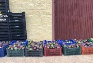 Detenidos tras ser sorprendidos robando 400 kilos de mangos en una finca de Isla Cristina