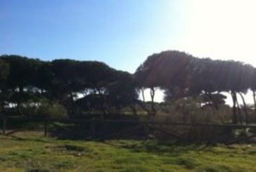 Vecinos Isla Cristina cumplen tradición de 'Las castañas' en día 'Tosantos'